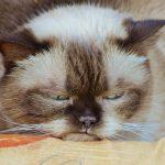 cat-1378203_960_720